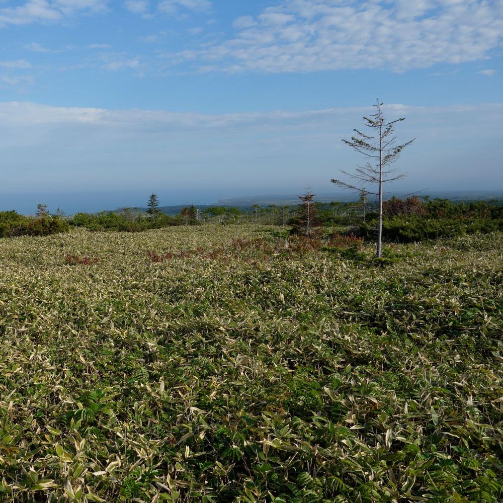 Ферма на острове Кунашир